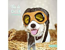 Bouchut Vie de chien - Calendrier illustré mensuel - 15 x 15 cm